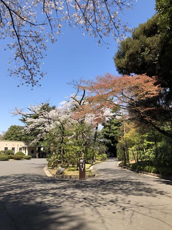 2019-04-02 11.04.24 桜.jpg