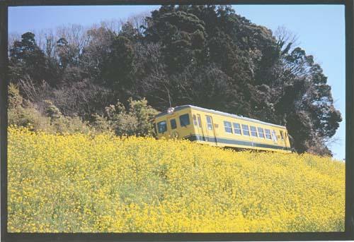 いすみ鉄道 H27.3.24.jpg